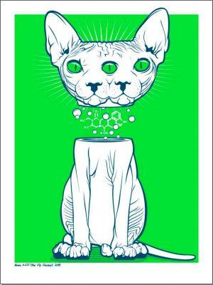 alvaro-p-ff-memento-mori-gato