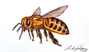 antonio-de-felipe-abeja
