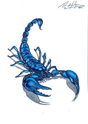 antonio-de-felipe-blue-scorpion