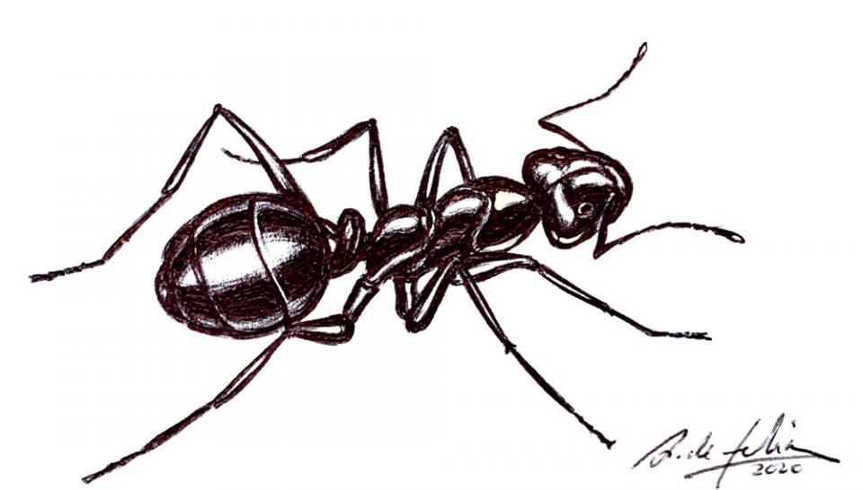 antonio-de-felipe-hormiga