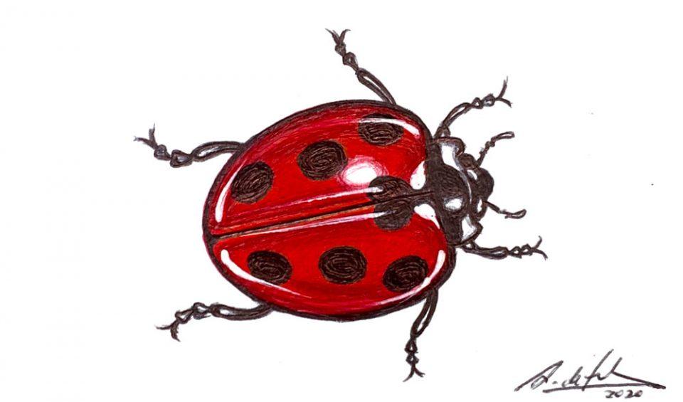 antonio-de-felipe-mariquita