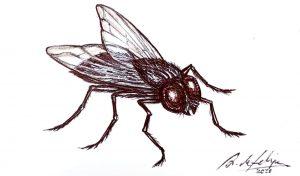 antonio-de-felipe-mosca