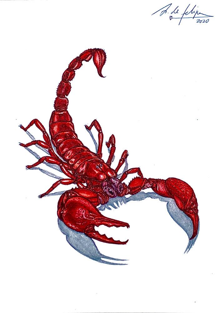 antonio-de-felipe-red-scorpion