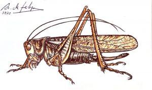 antonio-de-felipe-saltamontes